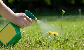 Person Spraying Weed Killer